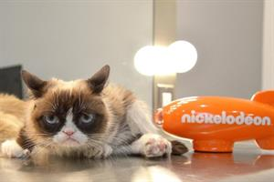 Brands and influencers pay tribute to Grumpy Cat