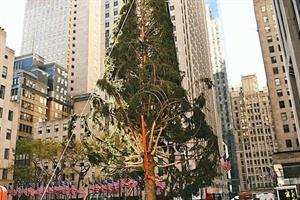 Are people being too mean to the raggedy Rockefeller Center Christmas tree?