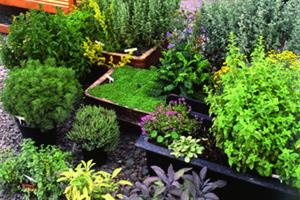Call to regulate herbal medicine