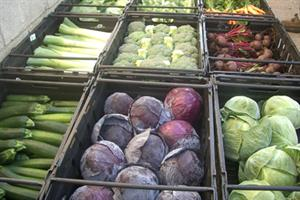 Leafy vegetables reduce diabetes risk