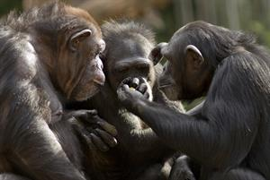 Monkey theory underpins plans for 1,500 GP superhubs