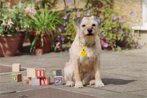 """Dogs Trust """"National Dog Survey"""" by Good Agency"""