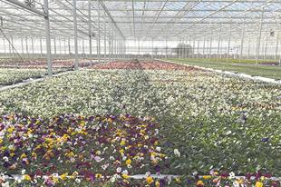 Top 60 Ornamentals Nurseries: Nursery leaders