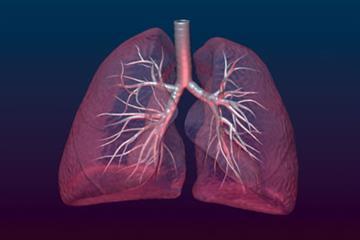 RCGP Curriculum - 15.8 Respiratory Problems