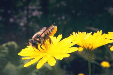 Pornhub unveils new genre of 'pollinator porn' to help save bees