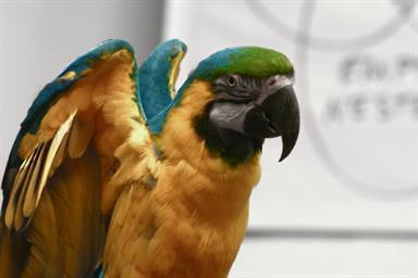 Foul-mouthed parrot fronts campaign to promote print media