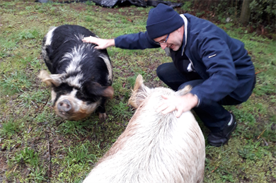 Conference co-organiser Professor Philip Armstrong meets some pigs on one of the conference outings