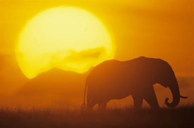 Safari, Zambia