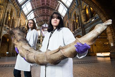 Fantastic Beasts to invade Natural History Museum