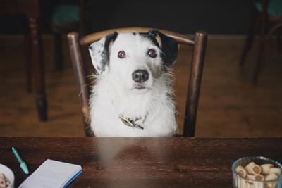 Harvey the dog finds love in his final Thinkbox ad