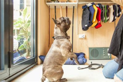 Fetch & Follow brings Christmas cheer to dogs and their owners