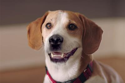 Turkey of the week: Go Outdoors' singing canine belongs in the doghouse