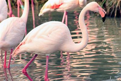 Campaign Diary: Jordans Cereals founders offers refuge for Roof Gardens flamingos; Oystercatchers plays grape catcher