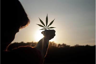 More than just a high: The future of cannabis marketing