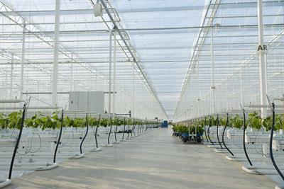 Net zero - horticultural perspectives
