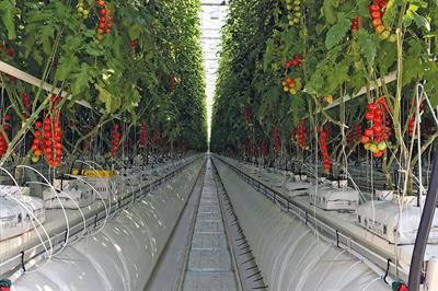 How state-of-the-art structures are helping growers meet rising demand