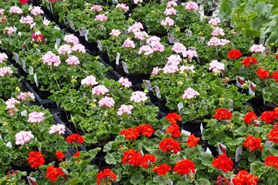 How to buy - liquid fertilisers