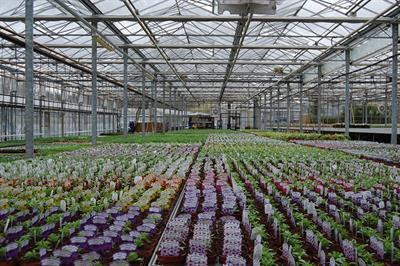 """Retail plants case study: Osmocote: """"It makes a huge difference."""""""