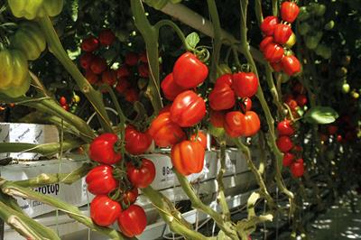 Grower sundries - Growing media for edibles