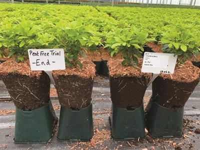 Helping our growers make the switch to peat-free
