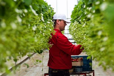 Three Brexit opportunities: what growers should ask for