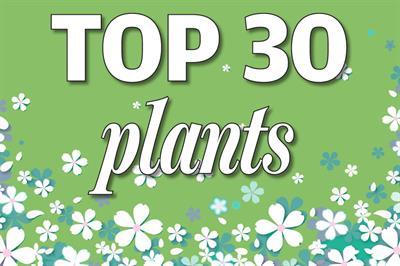 Top 30 Plants - Changes in popularity November/December 2020