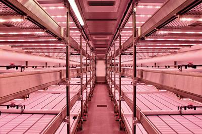 How vertical farming can grow more with less