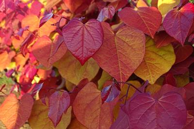Which plants have won awards this year?