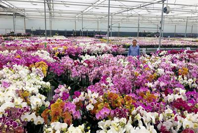 High-value orchids excel with water-soluble Peters fertilisers at Double H Nurseries