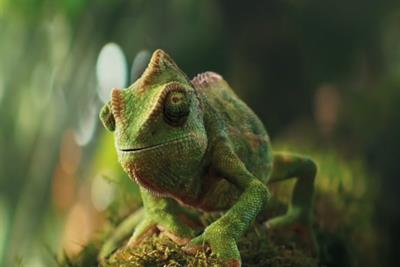 How VFX artists made a chameleon dance for Berocca's ad