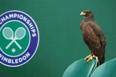 Stella Artois Wimbledon short tells tale of pigeon-hunting Rufus