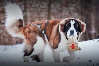 Mophie dispatches mountain rescue dogs to charge phones at SXSW