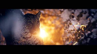 "Whiskas ""big cat little cat"" by AMV BBDO"