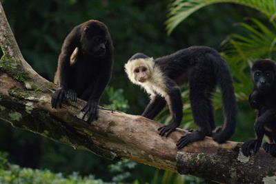 Ikea 'Monkeys' by Mother