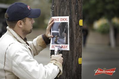 "Budweiser ""lost dog"" by Anomaly"
