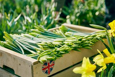 """Lidl """"Daffodils"""" by TBWA\London"""