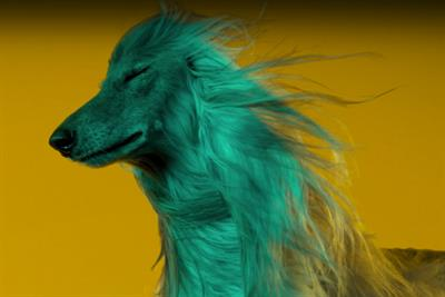 Pets get their groove on in new Sony spot
