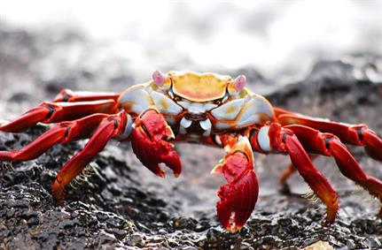 GandCrab ransomware evolves, scuttles back with new functionality