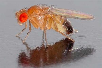 Docs reveal how Fruitfly Mac spyware initially spread