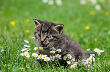 Domestic Kitten malware campaign targets Iranians
