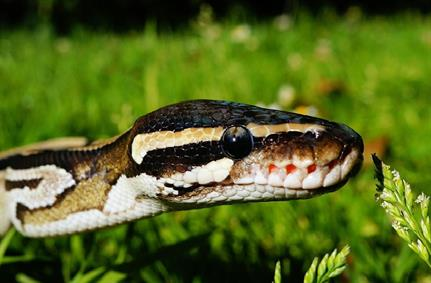 Python 0wned: malicious snakes on a cloud?