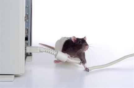 APT group TA505 testing out new modular RAT