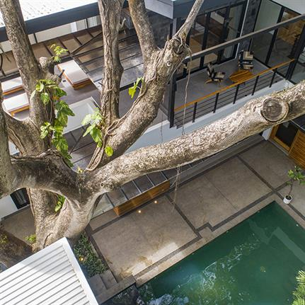 Tree encompassed by VA Studio's Casos Besos in Costa Rica