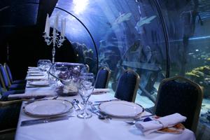 Alton Towers opens pirate-themed aquarium