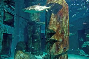 Shark at Sealife London Aquarium