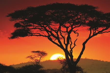 Serenity in the Serengeti