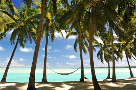 Palm trees in Jamaica (Image @istock.com)