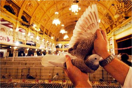 RPRA: returns to Blackpool for annual show