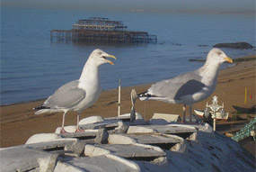 Seaside: bids open for £27m fund