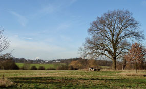 Green belt land in the Royal Borough of Windsor and Maidenhead